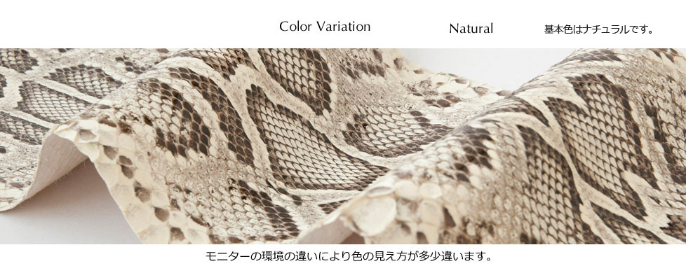 caiman_color